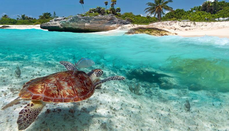 Os melhores parques da Ilha de Cozumel