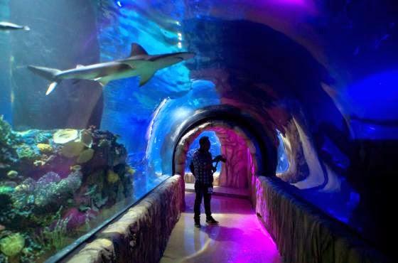 Interior do Aquário Inbursa na Cidade do México