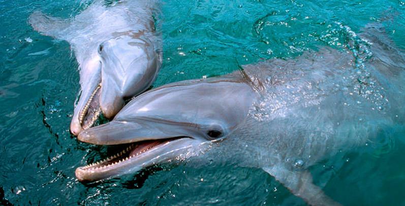 Informações sobre o Dolphinaris Cancun em Cancún