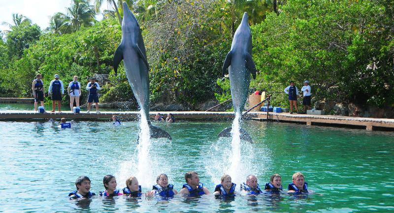 Dicas de como nadar com golfinhos em Cancún