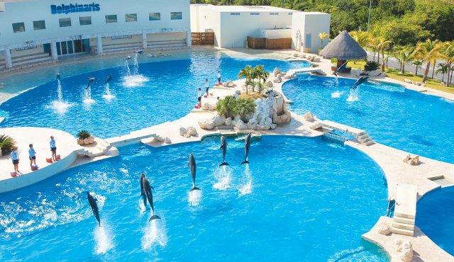 Onde nadar com golfinhos em Cancún | México