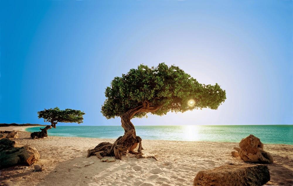 Melhores praias de Aruba no Caribe