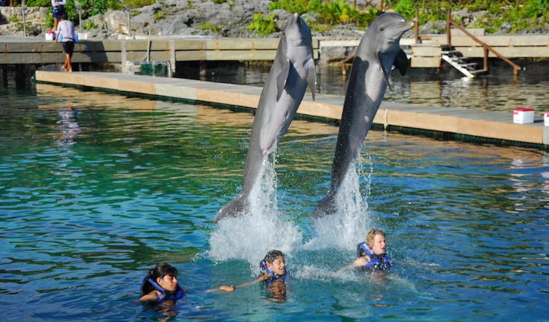 Nado com golfinhos em Cancún