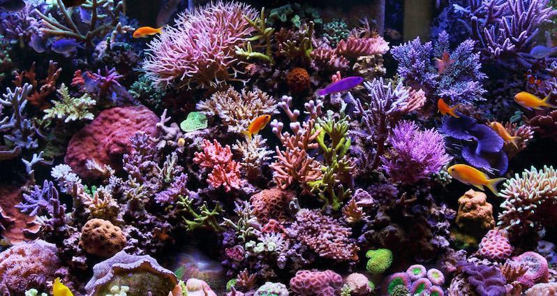 Coral Reef Aquarium no Parque Xcaret em Cancún