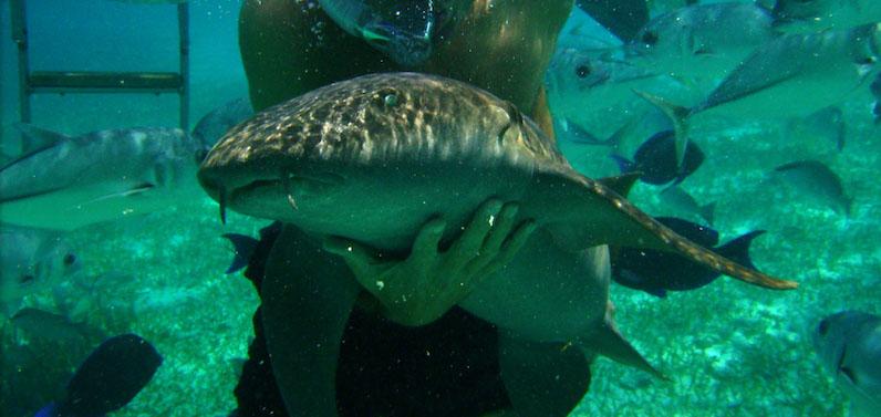 Nado com animais marinhos no Parque Xcaret em Cancún