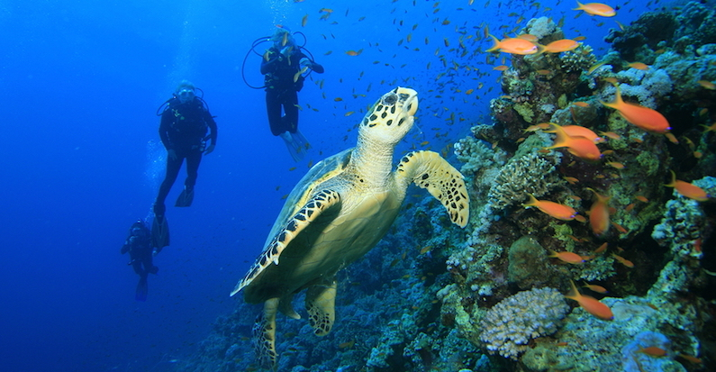 Vida marinha em Cancún