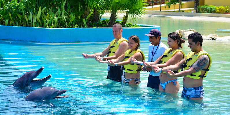 Trainer For a Day no Parque Dolphinaris Park em Cancún