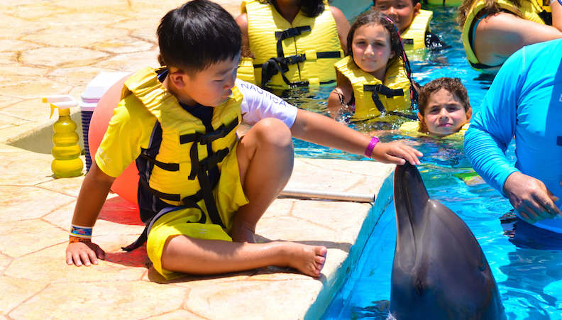 Dolphin Interactive Program no Parque Dolphinaris Park em Cancún