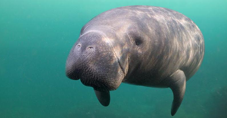 Nade com animais marinhos no Parque Xel-Há em Cancún