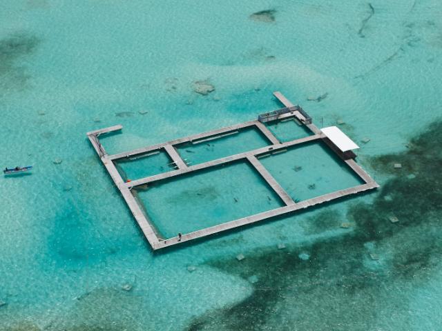 Dolphin Island Park em Punta Cana