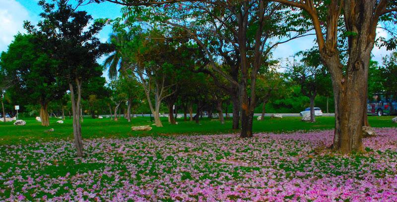 Belezas do Parque Kabah em Cancún