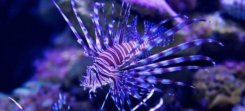 Peixe no Interactive Aquarium em Cancún