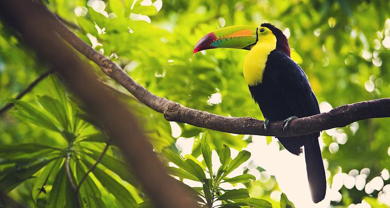 Bicho na Isla Contoy em Cancún