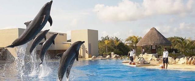 Nadar com os golfinhos em Cancún